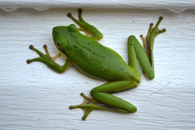 wm01frog