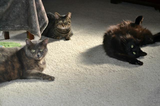 wmcats01